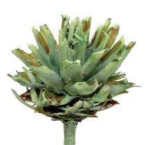Plumosum 1 grøn frostet 25p