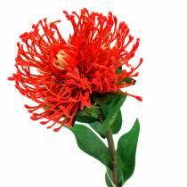 Protea kunstig rød 73 cm