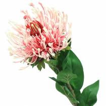 Protea kunstig lyserød 73cm
