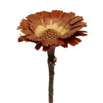 Repens rosette lys 8-9cm 25stk
