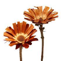 Repens roset Super 10 - 12cm 20stk