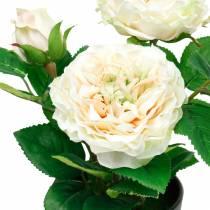 Pæon i en gryde, romantisk dekorativ rose, silkeblomst creme hvid
