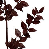 Ruscus kviste mørkerød 75cm - 95cm 1kg