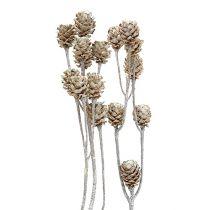 Salignum hvidkalket 25stk