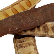 Scaletta bælg naturlige 25cm - 50cm 25stk