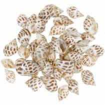 Deco søsnegl natur 1-4cm 1kg