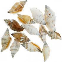Dekorative snegleskaller er tomme i et bastnet Havsnegle 400g
