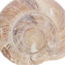 Snailskal hvidvasket 24 timer i døgnet