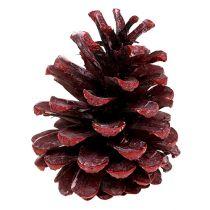 Sort fyrretræskegler rød frostet 5-7cm 1kg