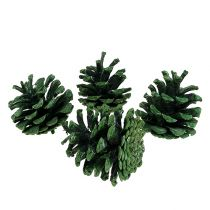 Sort fyrretræskegler grøn frostet 5-7cm 1kg