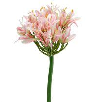 Silkeblom agapanthus pink 80cm