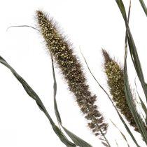 Tørrede blomster Setaria antracit naturlig hirse flok 100g