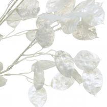 Dekorativ gren sølvblad hvid Lunaria gren kunstig gren 70cm