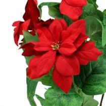 Buket med julestjerne rød L47cm