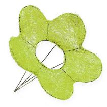 Sisal manchetblomst grøn Ø25cm 6stk