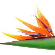 Strelitzia paradis fuglblomst 95cm