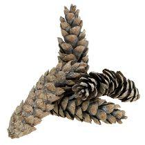 Strobus kegler 15cm - 20cm hvidvasket 50stk
