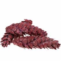 Strobus kegler naturlig dekoration rød 15cm - 20cm 50stk