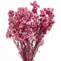 Tørrede blomster Pink Tørrede blomster Buket Tørrede blomster Pink H21cm