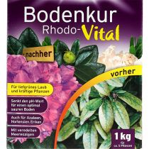 Substral kur Rhodo-Vital 1 kg