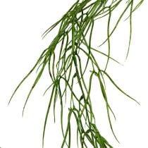 Sukkulent plante hængende grøn 145cm