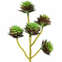 Sukkulent pluk grøn / brun 35,5 cm