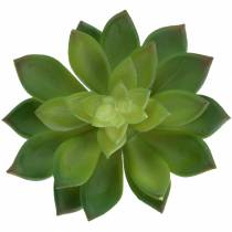 Sukkulent husløg grøn 14cm