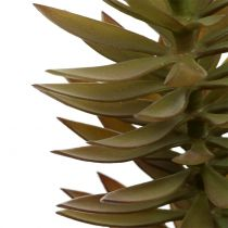 Sukkulent gren lysebrun grøn 48 cm