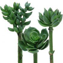 Succulenter sorteret 11 cm 3stk