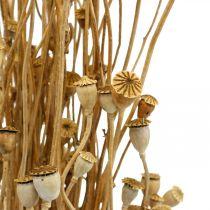 Tørrede blomster valmue kapsler naturlig tørret vildtørring dekorationsbunt 100g