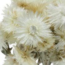 Tørrede blomster Hætteblomster naturlige hvide, evige blomster, tørrede blomsterbuket H33cm