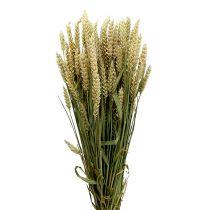 Hvede Bund Natur 1St dekorativ hvede