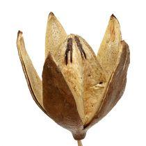 Vilde lilje på en pind naturlige farver Ø6,5cm L55cm 45stk