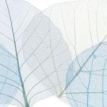 Vilje blade skelettet blå, grå assorterede 200 stk