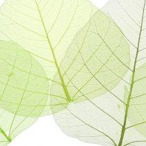 Vilje blade skelettet grønne assorterede 200 stk