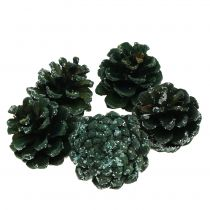 Fyrretræskegler grønne isede 200g