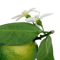 Citroner med blomst 9,5cm grøn 4stk