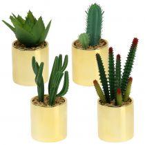 Kaktusgrøn i en gylden gryde 12cm - 17cm 4stk