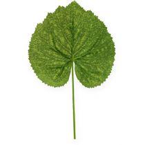 Dekorativ plante efterlader Galax W10cm L22cm 24stk