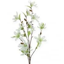 Magnolia gren lysegrøn 91cm