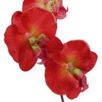 Dekorativ orkide rød 68 cm