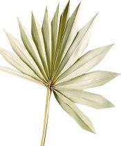 Palmspear Sun naturlig 30stk