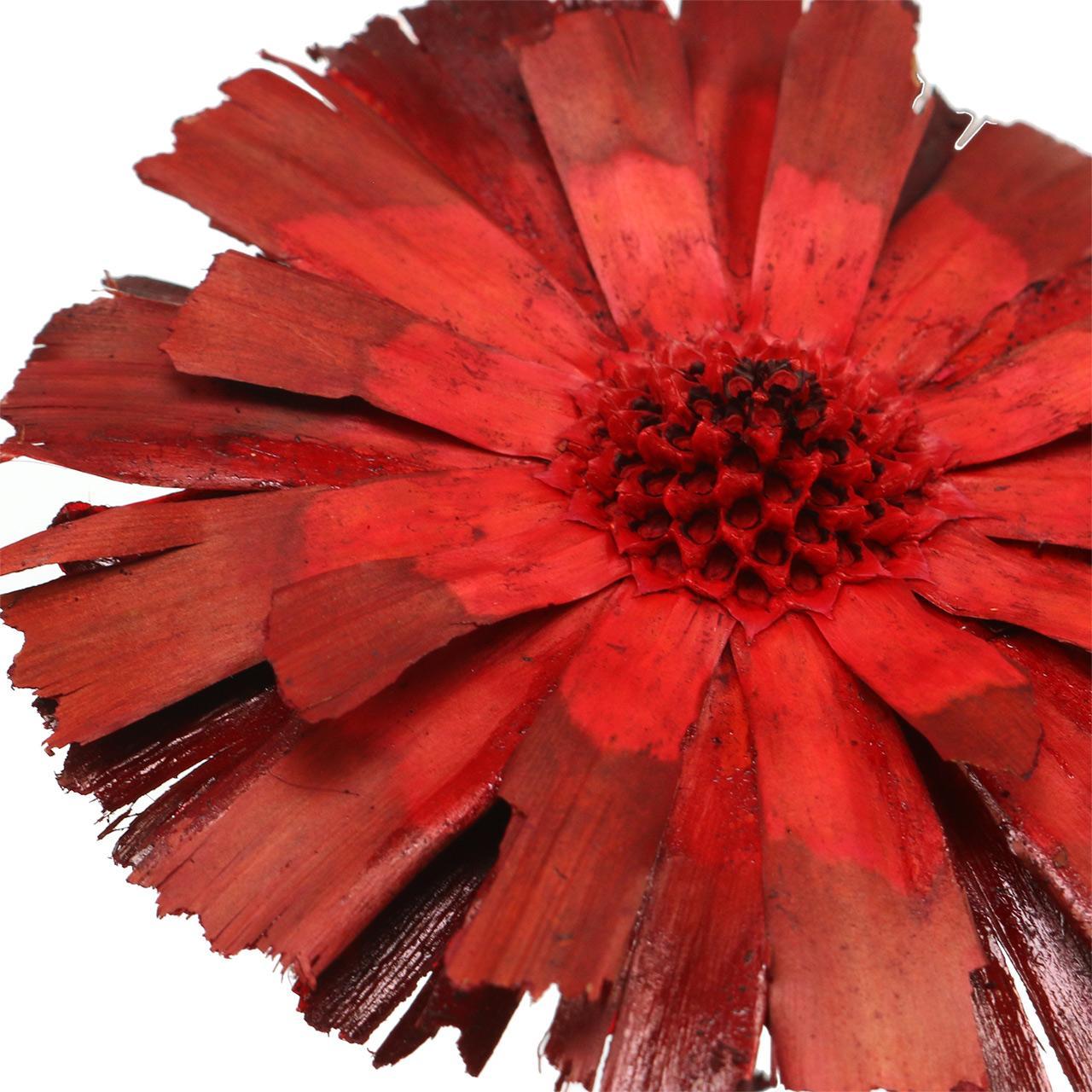 Repens roset rød 8cm - 9cm 25stk