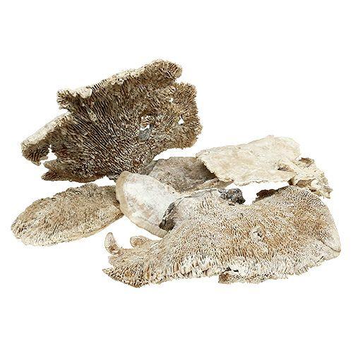 Træ svamp vasket 1 kg
