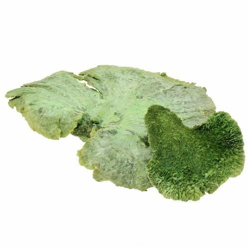 Træsvamp grøn hvid vasket 1 kg