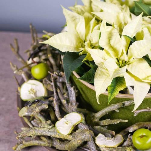 Dekoast currybusgrøn vasket 500g