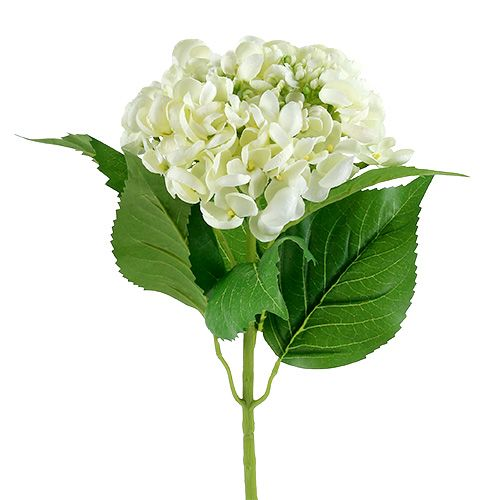 Hortensia 60cm hvid