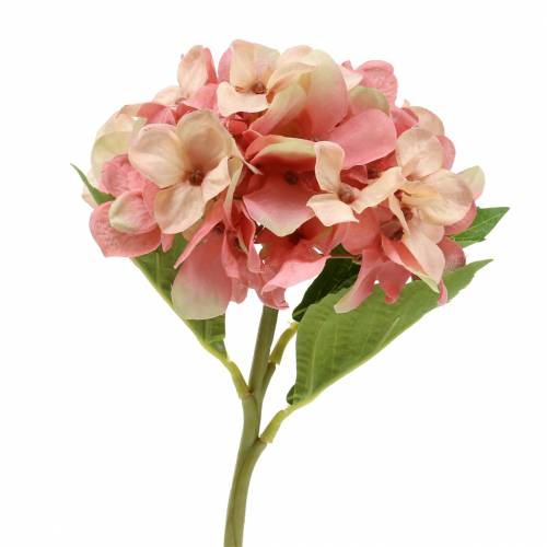 Hortensia beige / pink 35cm