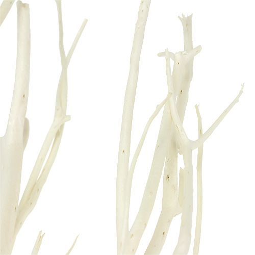 Mitsumata grene hvid 34-60cm 12stk