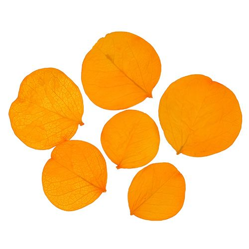Moneta efterlader gylden gul 50g